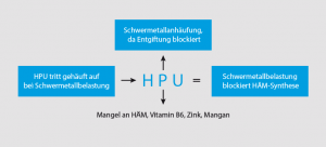 hpu-schwermetallbelastung